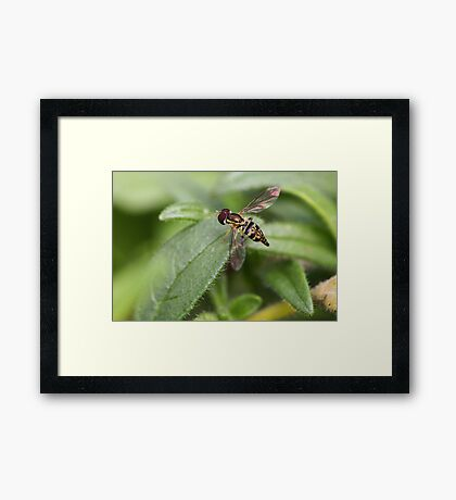 Colorful Fly Framed Print