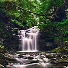 Wet Wilderness Surrounding Big Falls by Gene Walls