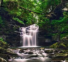 Wet Wilderness Surrounding Big Falls by Gene Walls