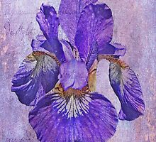 Japanese Iris - Born Of The Purple by MotherNature2