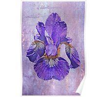Japanese Iris - Born Of The Purple Poster