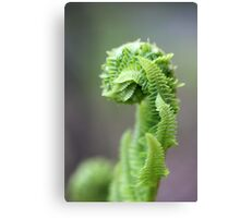 Young Fern 1 Canvas Print