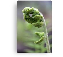 Young Fern 2 Canvas Print