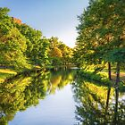 Boston Flows Green With Summer by Owed to Nature