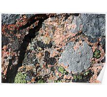 Acadia Granite 11 Poster