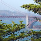 Golden Gate from Point Lobos by David Denny