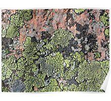 Acadia Granite 14 Poster