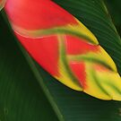 Exotic Heliconia by Robyn Williams