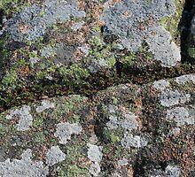Acadia Granite 23 by marybedy