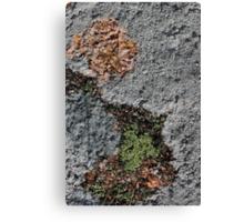 Acadia Granite 24 Canvas Print