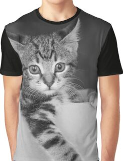 Kitten in a box 3 Graphic T-Shirt