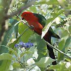 King Parrot by watchthebirdie