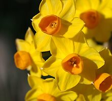 Dresses in Happy Yellow - Jonquils by Joy Watson
