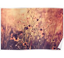 Yellow Flowers Morning Haze Poster