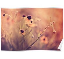 Yellow Country Flowers Poster