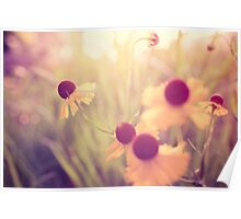 Yellow Flowers Memories Poster