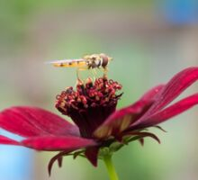Hoverfly on a Flower Sticker