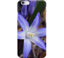 Chionodoxa luciliae blue iPhone Case/Skin