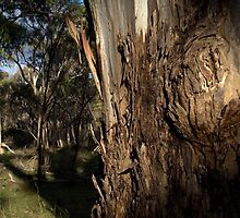 View Of Cromer Conservation Park by Ben Loveday