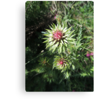 Alpine Thistle Canvas Print