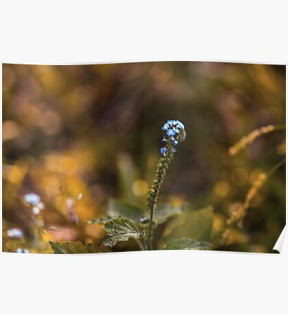 Little Blue Flowers Poster