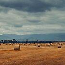 This Is the Land of Plenty by Peter Kurdulija