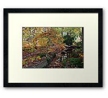 Drunk on Autumn Framed Print