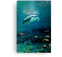 Green Sea Turtle Canvas Print