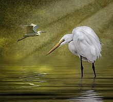 Everglades Evening by Tarrby
