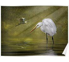 Everglades Evening Poster