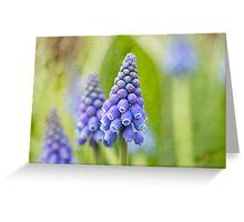 Muscari - Springtime Flower Greeting Card