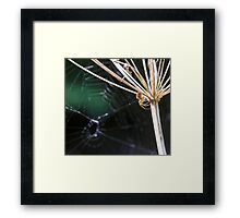 Spider in the Woods Framed Print