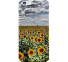Sunflower field, Warwick, QLD iPhone Case/Skin