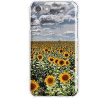 Sunflower field, Warwick, QLD iPhone Case/Skin