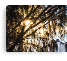 Dawn Sunlight Burst Canvas Print
