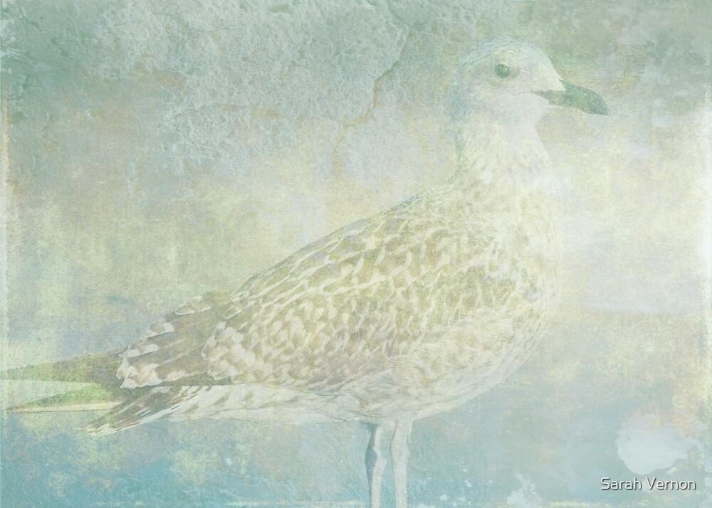 Seagull Sonata by Sarah Vernon
