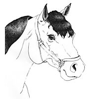 Ink Horse Sketch Photographic Print