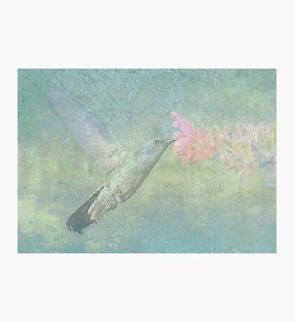 Hummingbird Tune Photographic Print