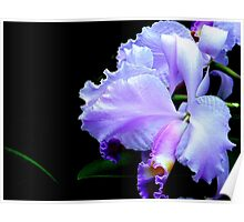 The Mystery of an Orchid Poster