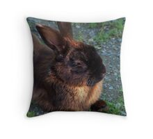 Year of the RABBIT !!! Throw Pillow