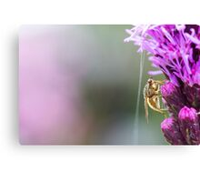 Insect on a Purple Flower Canvas Print
