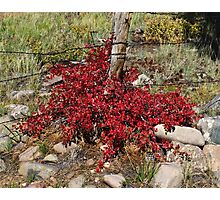 Autumn's Red Photographic Print