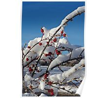 Rose Hips On Ice Poster