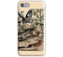 A Jay Jostles In Juniper iPhone Case/Skin