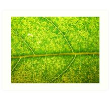 Macro Leaf No 4 Art Print