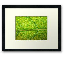 Macro Leaf No 4 Framed Print
