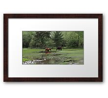 Cooling off in the summer sun Framed Print