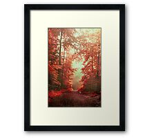 magical redwoods Framed Print