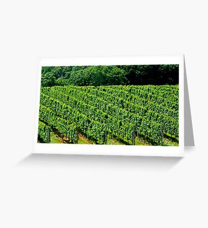Summer Vineyard - 2    ^ Greeting Card