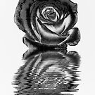 Chrome rose by shalisa